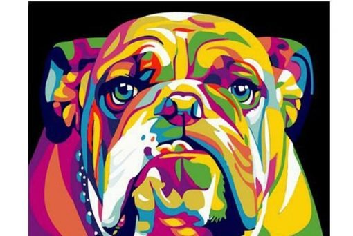 Pitbull Paint By Numbers