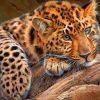 5d leopard diamond painting